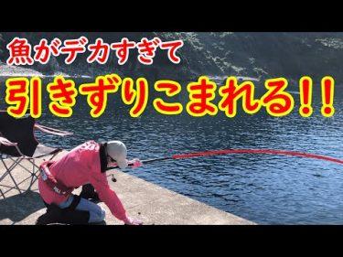 デカすぎるでしょ😱‼️石鯛釣りしてたら魚に引きずり込まれるはめに💦 #ポテちんTV